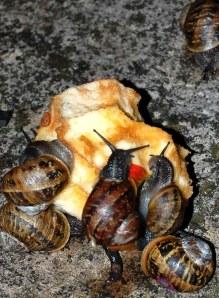 snails7